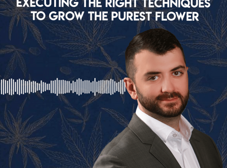 Cannabis Cultivation: Executing the Right Techniques to Grow the Purest Flower